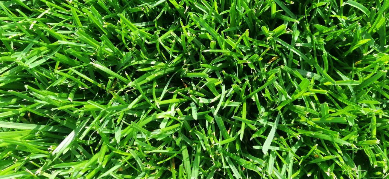 Рулонний газон спортивний